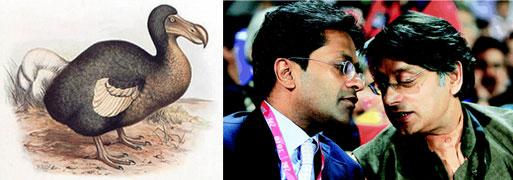 dodo-modi-tharoor