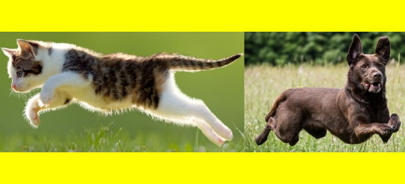 The brand positioning of cats and dogs